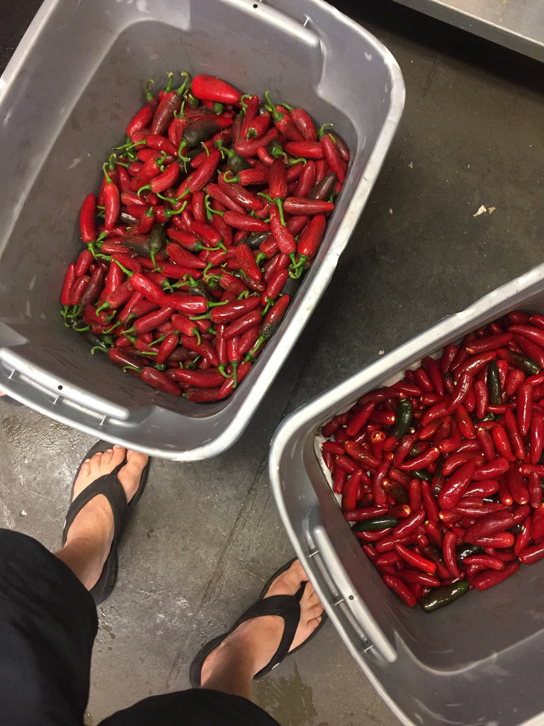 buckets of kiawe peppers
