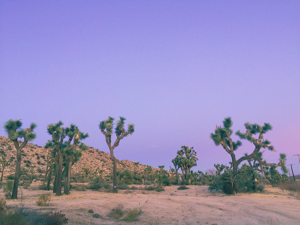 Joshua tree, natural reserve, national park