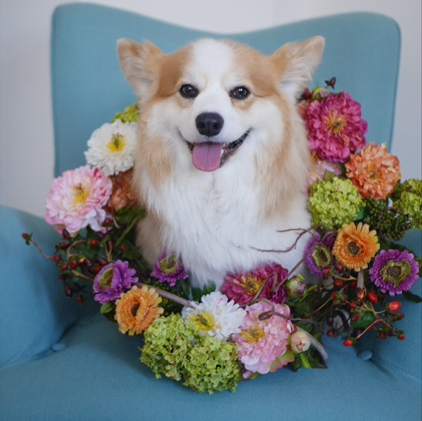 7 Ways To Incorporate Your Dog Into Your Wedding (Tibby Approved)