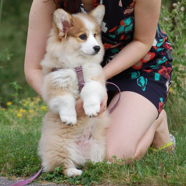 What To Expect When You're Expecting (A Dog) - Part 2 - A List of Items You Need
