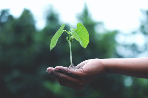 A hand holds a green plant