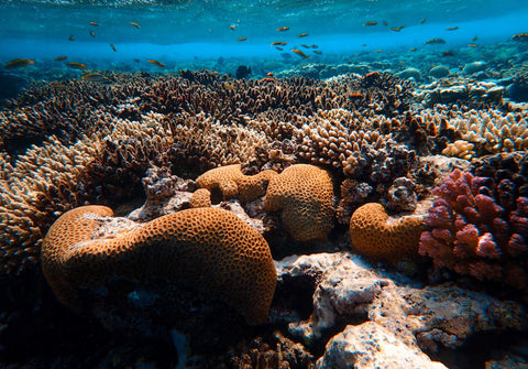 Colorful coral reef in the blue ocean