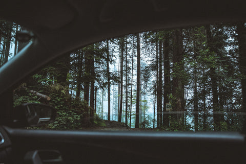 Looking out a car window into the forest