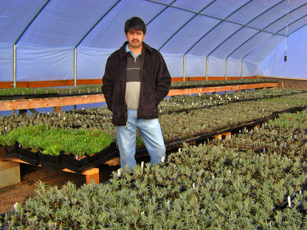 Meet the Grower: Victor's Lavender