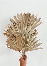 Load image into Gallery viewer, Sun Cut Dried Palm Bunch