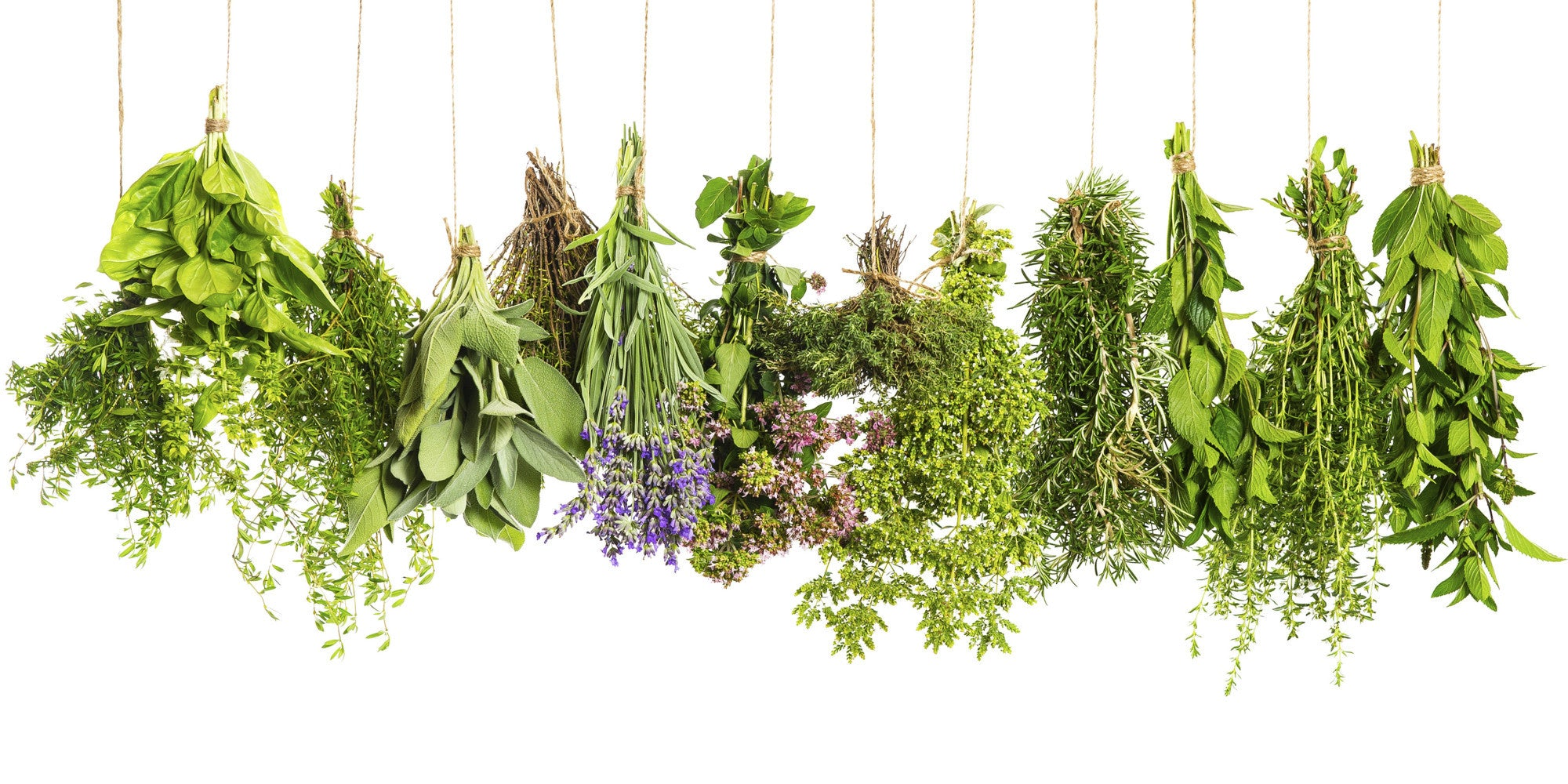 Herbal Recipes For a Refreshing Summer!