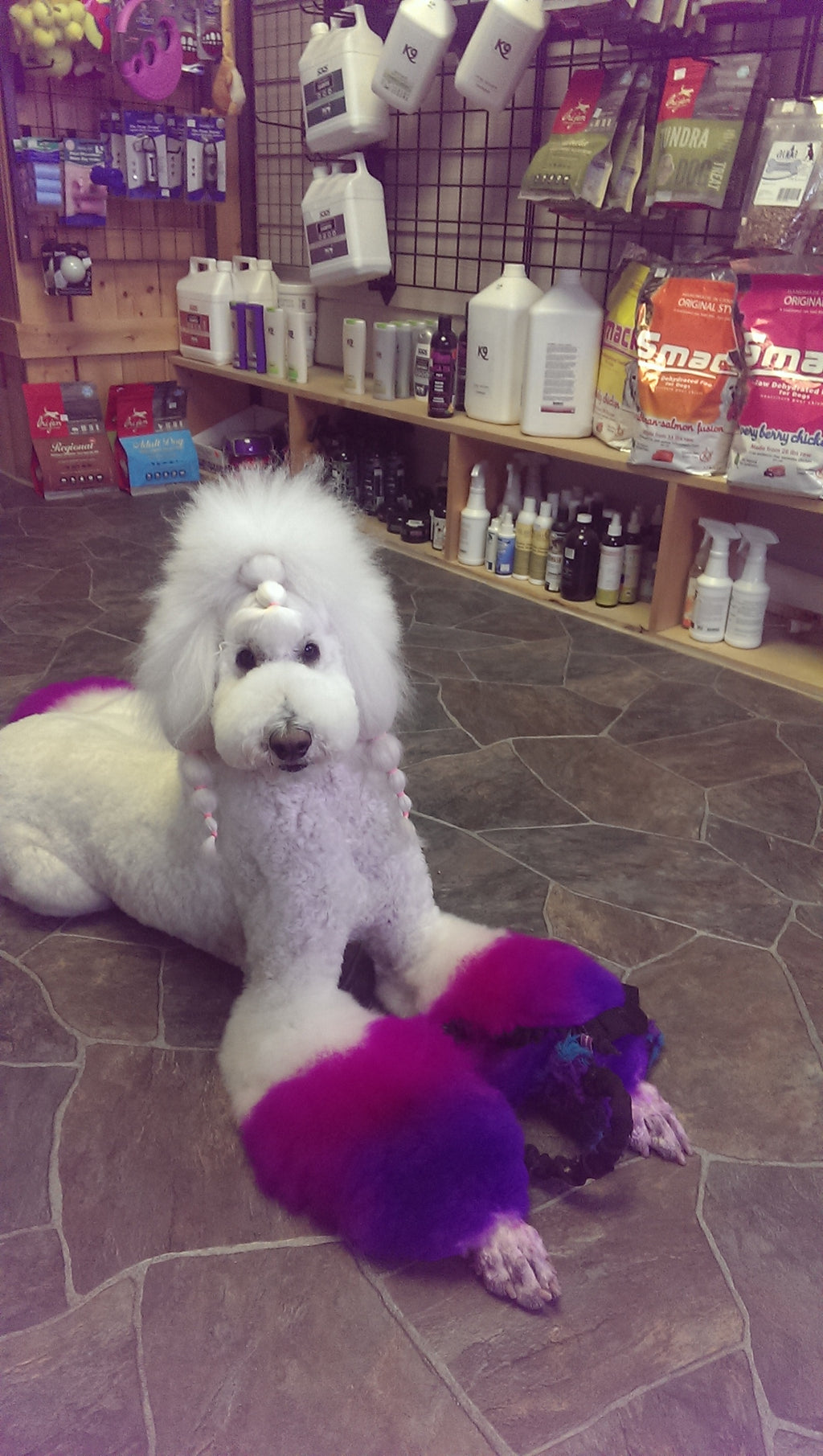 Salon Creative: dyeing tails & Legs- How to do it- with video
