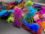 Feather extensions- Spotted Guinea