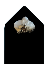 CLEOPATRA - Classic Black Envelope with Gold Orchid Liner - Envelopes by Olympia