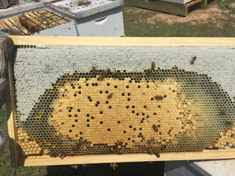 tray from a beehive with bees