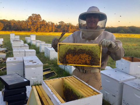 beekeeper in the field holding up a drawer from a hive