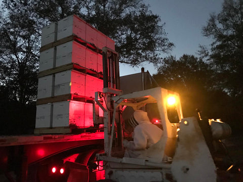 farmers loading bee hives onto flatbed tractor trailor semi truck with fork lift at dawn
