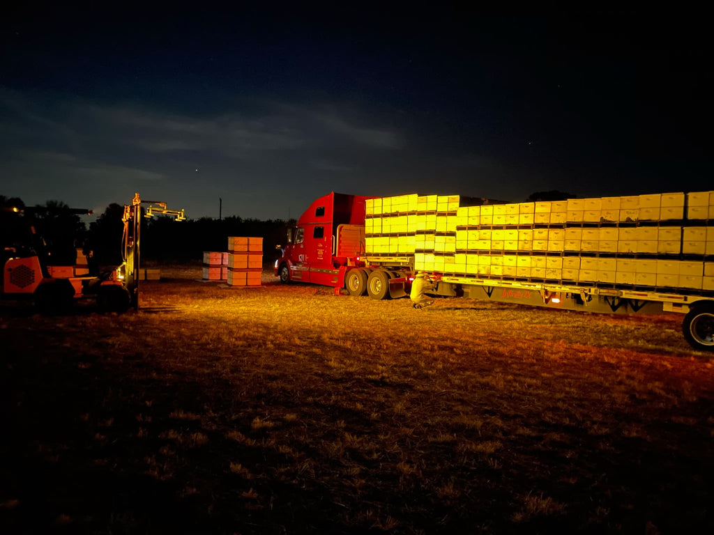 truck moving bees at night