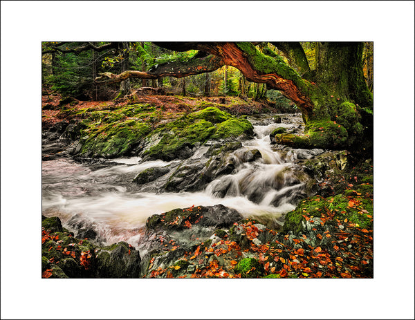 Irish Landscape Photography Shimna River Co Down