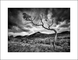 Black & White Landscape print of Glen Affric in the Highlands of Scotland