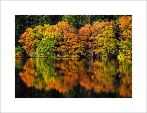 Fine art landscape photography of reflected trees in Scotland