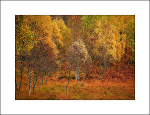 Scottish Fine Art Landscape Photography|Glen Cannich|John Taggart Landscapes