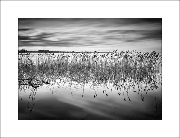 Black and White Landscape Photography of Reeds on Lough Neagh