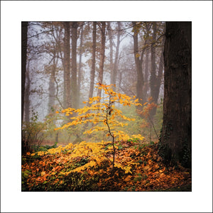 A Fine Art Irish landscape of a young tree in Antrim by award winning Fine Art Landscape Photographer John Taggart