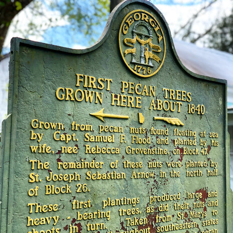 The History of the First Pecan Trees in St. Marys, Georgia