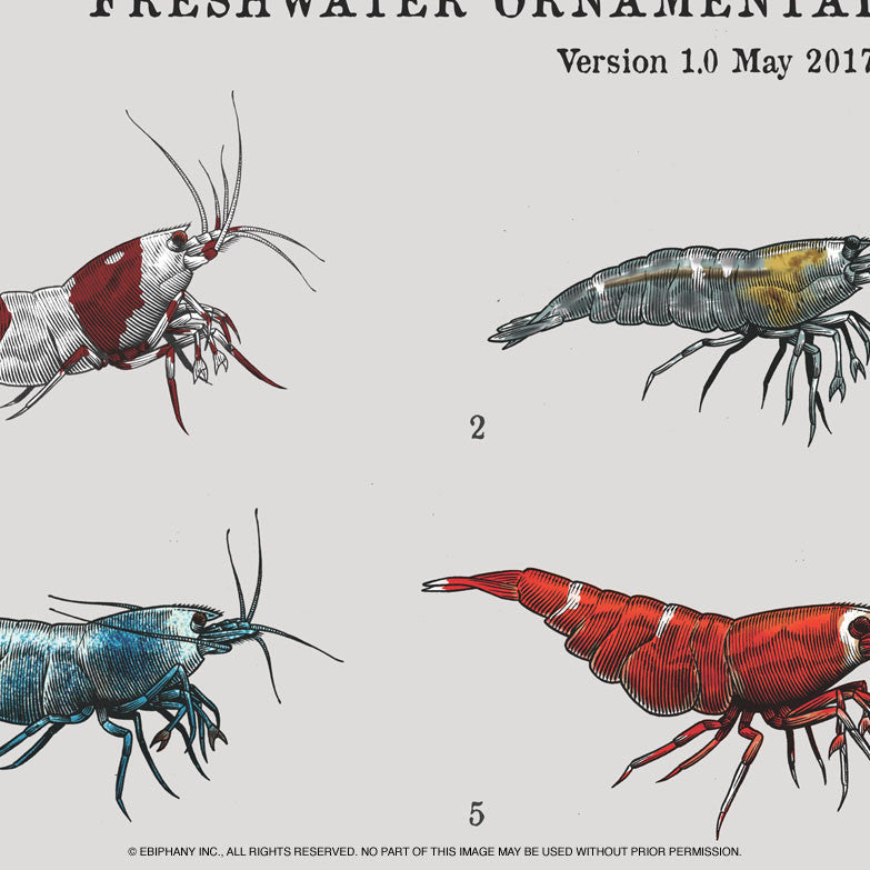 LOWKEYS X EBIPHANY Presents: Fresh Water Ornamental Dwarf Shrimp Poster (V1.0, May 2017)