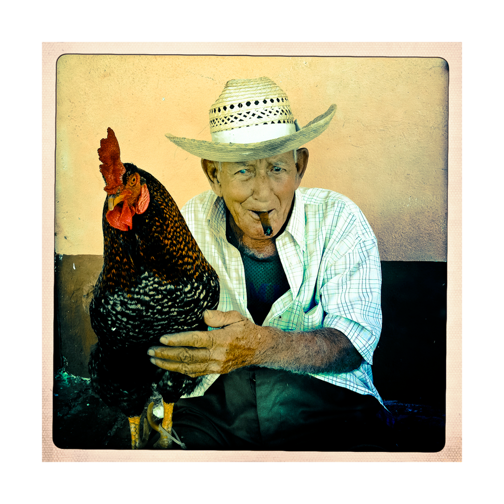 Rooster, Cuba
