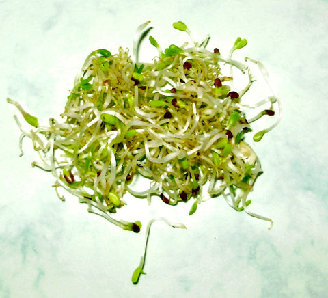 Broccoli Sprouts releases Benzene from brain cells