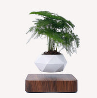 Levitating Air Planter (50% Off NOW!)