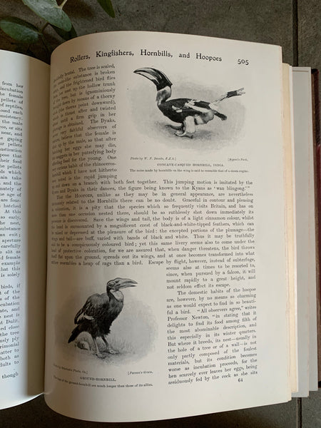 1950s Animal Encyclopaedia with Leather Spine
