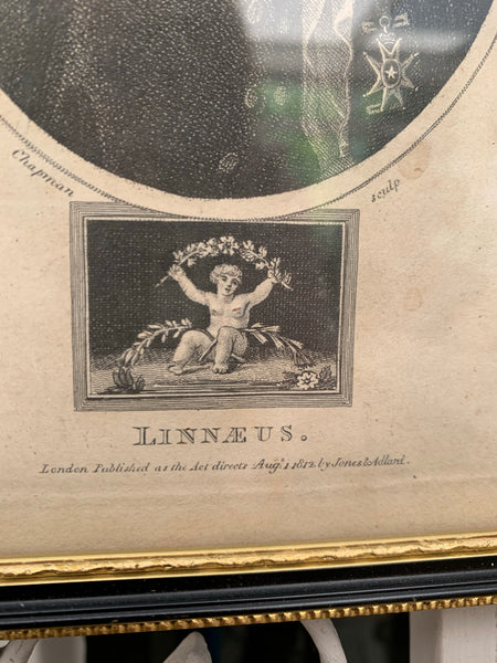 Pair of Framed Antique Plates/Etchings