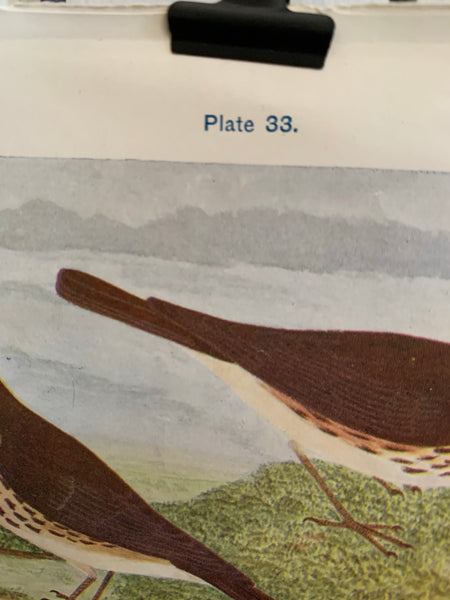 19th Century Coloured Book Plate of a Bird