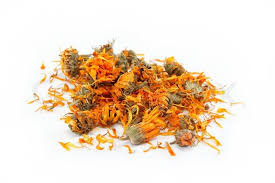 All about beautiful Calendula