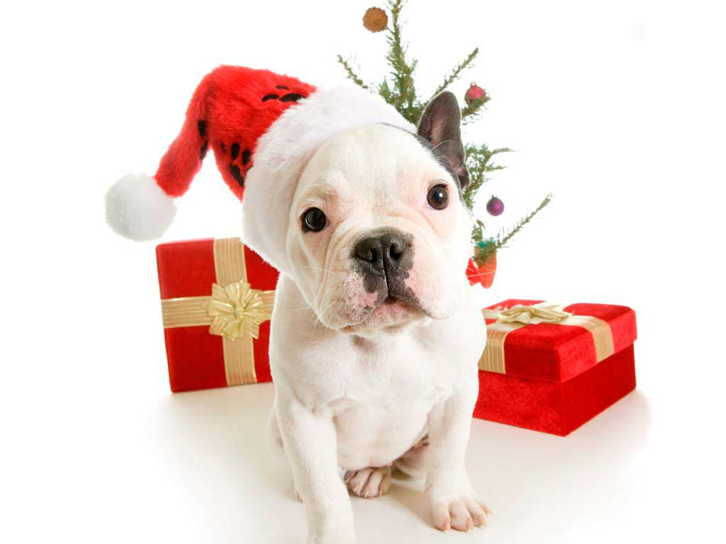 Holiday Gift Guide: Perfect Gift For Your Pets