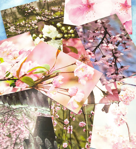 spring flower flowers blossom postcard postcards bundle of 3 uk cute kawaii bundles stationery cherry pink