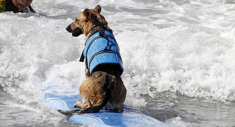 Pet Dog Swimming Life Jacket Vest Aquatic Safety Saver (Size L)