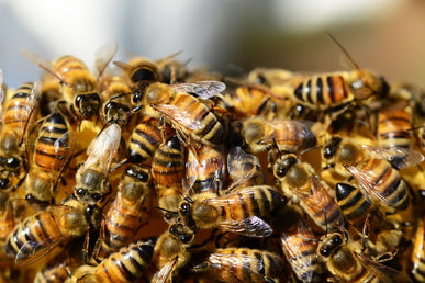 What Skincare Ingredients Are Sourced from Bees?