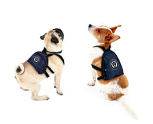 Load image into Gallery viewer, Philadelphia Union Pet Mini Backpack