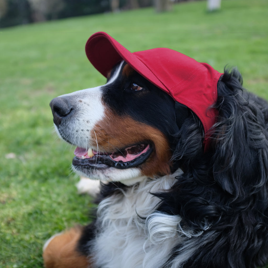 Calgary Flames Pet Baseball Hat