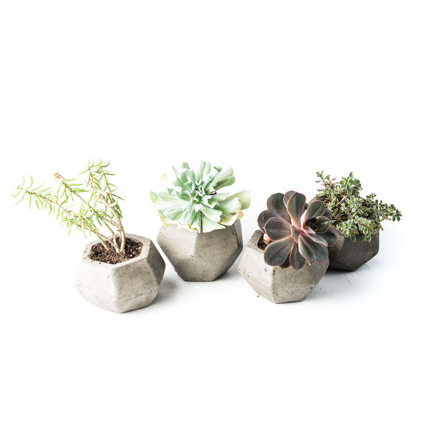 Cerrito Planter Set
