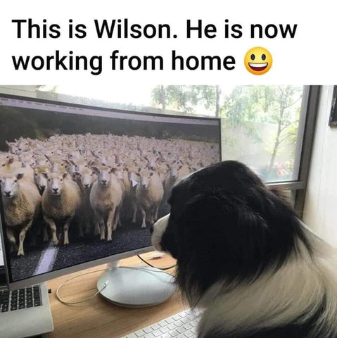 Unico-Zelo-Blog-Friday-Fluff-Dogs-Working-From-Home