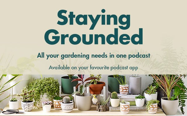 Unico-Zelo-Blog-Bunnings-Stay-Grounded