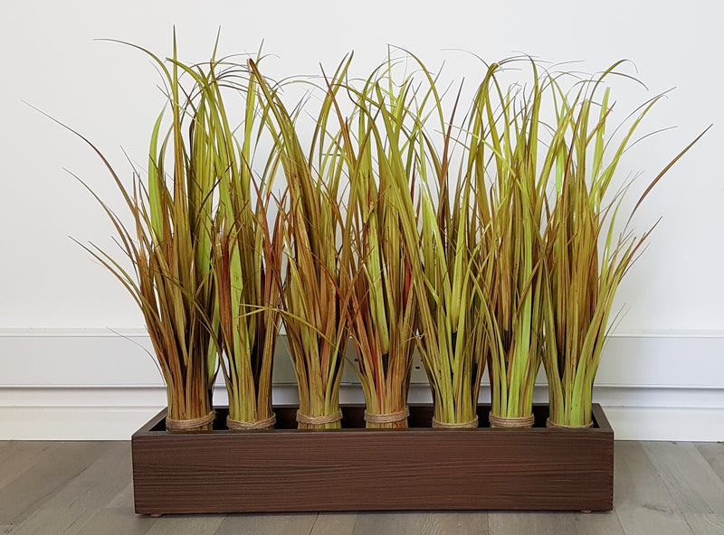 River Grass - Height 65cm (Not potted) - 15ON005