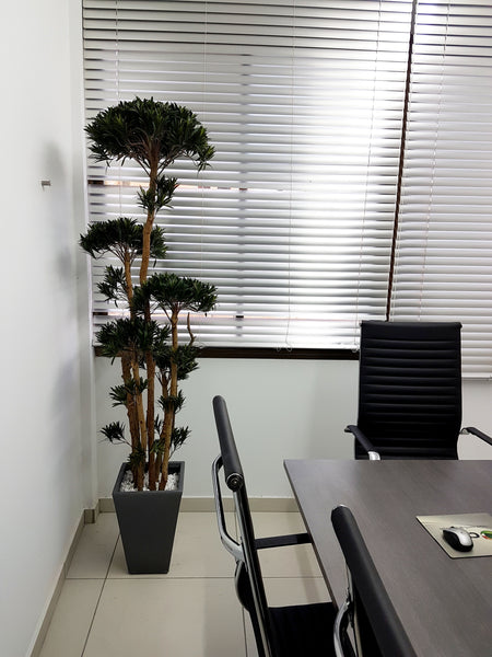 Large Artificial Podocarpus (Height: 200cm) - 25007-200