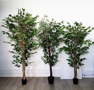 Artificial Ficus Tree with Silk Leaves (Height: 160cm) - AL15088