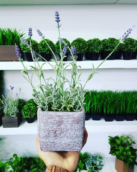Potted Lavender (Height: 32cm) - AL16106