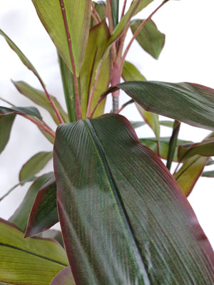 Artificial Dracaena Plant (Height: 105cm) - AL15006