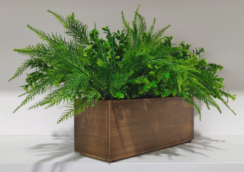 Cypress & Aglaia pot