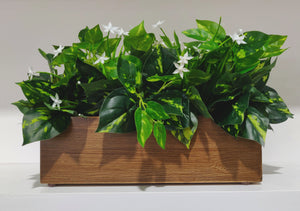 Pothos & white jasmine pot