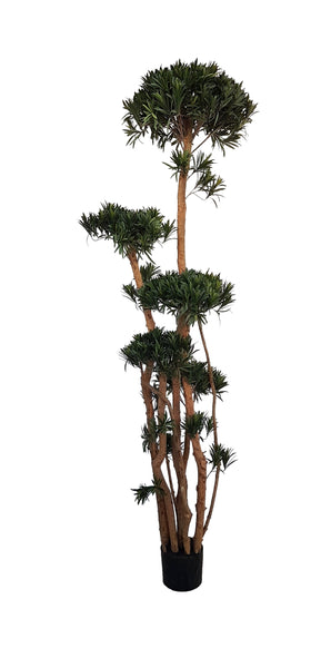 Large Artificial Podocarpus (200cm) - 25007-200