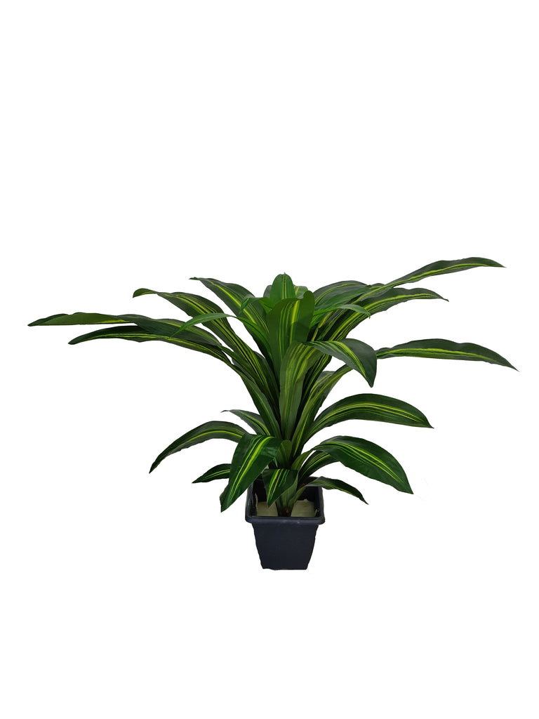 Artificial Dracaena Plant (Height: 80cm) - A004
